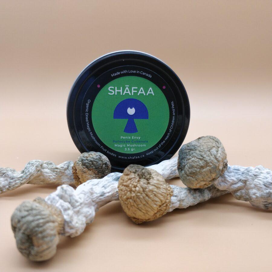 SHAFAA Penis Envy Dried Magic Mushrooms