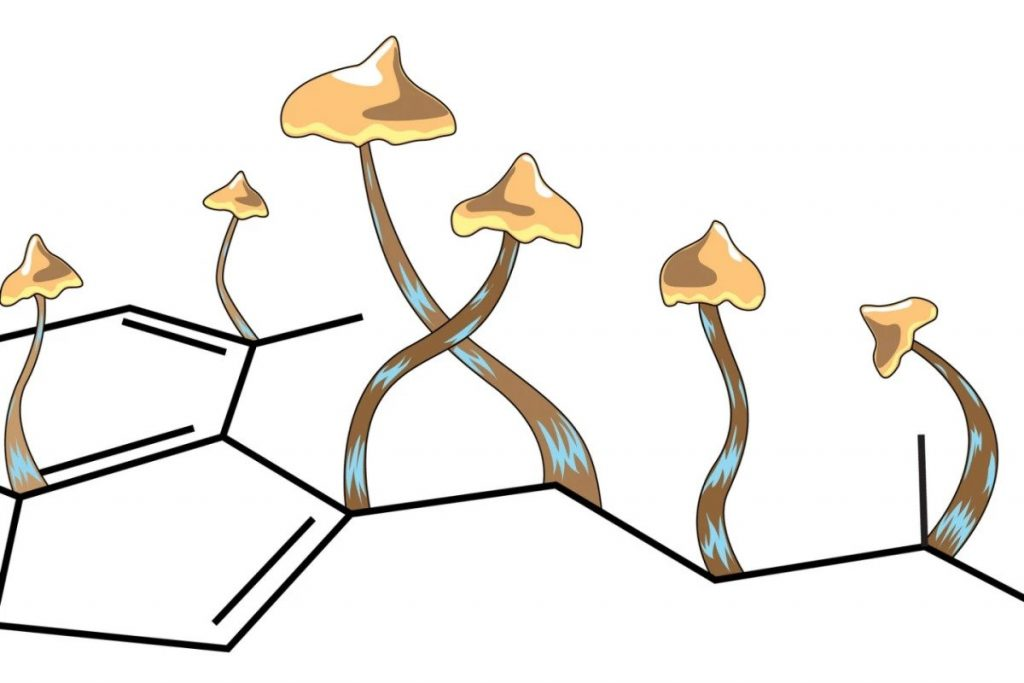 Oregon to officially vote on legalizing psychedelic psilocybin therapy