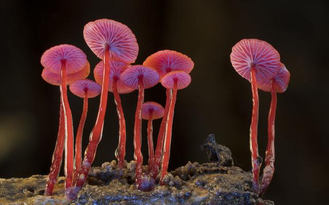 Fantastic Fungi Netflix